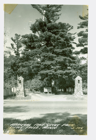 Primeval Pine Grove Park, Little Falls, MN, undated photo from MCHS collections.