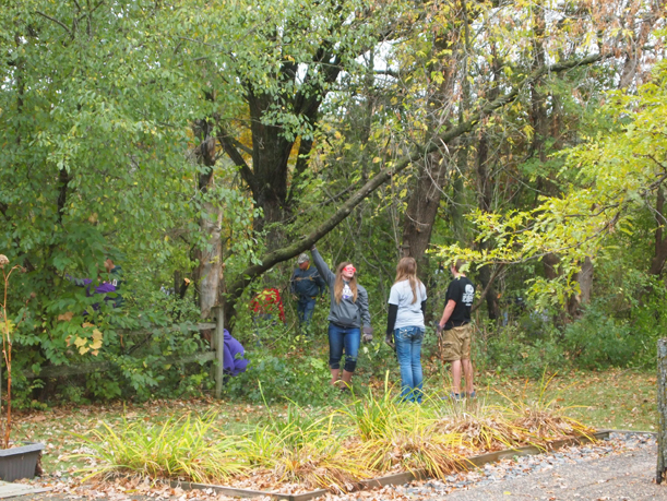 Buckthorn removal at Weyerhaueser Museum by LF High School forestry students under direction of Doug Ploof, October 2015.