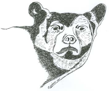 Bear drawing by Mary Warner.